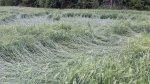 Убытки понесли хозяйства Курагинского района