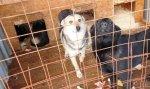 На 8 территориях Курагинского района уже идёт отлов собак