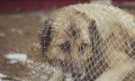 Обсуждены результаты отлова собак в Курагинском районе